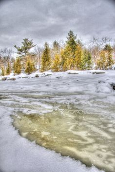 Ice and pines, Georgian Bay