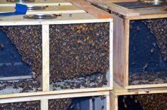 WSHG.NET | West Sound Beekeepers Association — Learn About Bees, Beekeeping | Featured, For The Garden | April 9, 2015 | WestSound Home & Garden