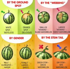 How to pick watermelons.Good to know! Picking Watermelon, Types Of Watermelon, Watermelon Benefits, Sweet Watermelon, Watermelon Ripeness, Fruit Picking, Watermelon Slices, Fruit And Veg, Fruits And Veggies
