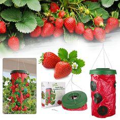 Buy Strawberry Upside Down Hanging Planter Plant Hang Row Greening Planting at Wish - Shopping Made Fun