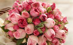 ピンクの花、美しい花束をバラ 壁紙 - 2560x1600