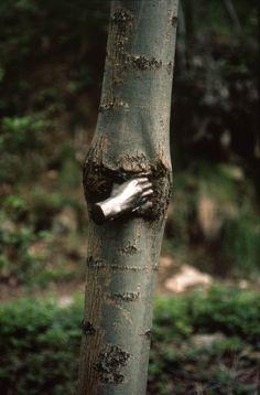 giuseppe penone, 'continuerà a crescere tranne che in quel punto', 1968 documentation of the growth of the tree in 1978, courtesy the artist photo © archivio penone