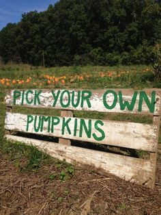 Top 10 pumpkin patches in Ohio