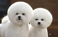 grooming anyone?