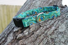 peacock dog collar. maybe my peacock obsession has gone too far. In fact, it's gone to the dogs! lol