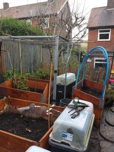 Tidying up my raised beds in my back garden and cleaning my greenhouse today. Planted garlic, chilli's and onions. #funinthewinter #homeallotment #homegrown #vegitablegarden #fruitgarden Fruit Garden, Tidy Up, Allotment, Back Gardens, Raised Beds, Onions, Life Is Good, Garlic, Cleaning