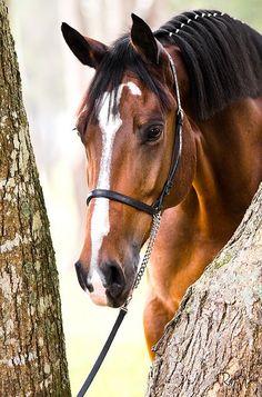 Horse - cute photo