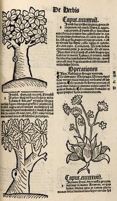 Hortus sanitatis, plants of the East - and see instructions pdf