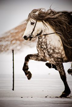 Lovely Icelandic horse (I can guess this one's breed because the rider's feet are dangling lol)