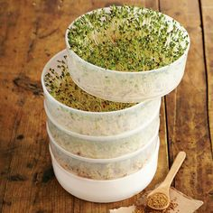4 Tier Sprouter Kit from Williams Sonoma Raw Food Recipes, Gourmet Recipes, Healthy Recipes, Williams Sonoma, Alfalfa Sprouts, 3 Sprouts, Sprouting Seeds, Kraut, Superfood