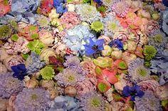 Blütenmeer, Plano De Fundo, Rosa, Roxo