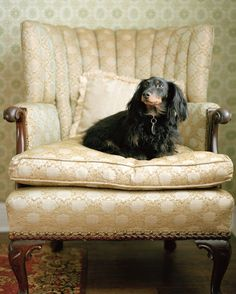 Dachshund, 16 x 20 Fine Art Photograph @siblingrivalrie   on Etsy