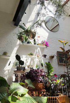 strategically placed mirror Decor, Garden Room, Pretty Room, Green Interiors, Plant Aesthetic, Bedroom Boho, Home Deco, Plant Decor, Indoor