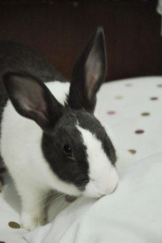 Bunny just got caught nibbling the pillow - April 27, 2013