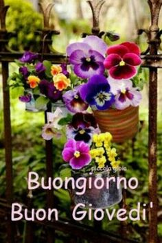 Buongiorno 🌹buon giovedì 🌷 Beautiful Flowers Images, Flower Images, Good Thursday, Pansies, Happy Friday, Good Morning, Projects To Try, Floral Wreath, Facebook