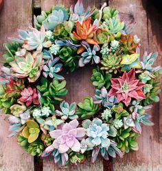 Succulent Wreaths - Cactus Jungle : Succulent Wreaths, now at your local friendly Cactus Jungle, Berkeley Succulent Wall Art, Succulent Planter Diy, Succulent Centerpieces, Hanging Succulents, Succulent Wreath, Succulent Gardening, Succulent Arrangements, Cacti And Succulents, Hanging Plants