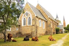 Beautiful cows rest in front of St Bartholomew Church, Market Street. St Bartholomew Church, Cows, Dog Food Recipes, Cool Photos, Rest, Beautiful, Dog Recipes