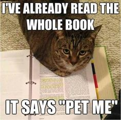 This is my cat when he decides I've been studying too much