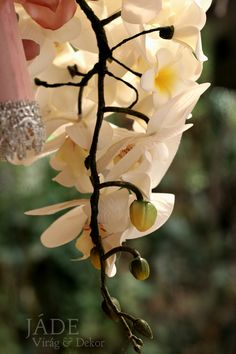 Frangipáni orchidea örökcsokor Jade, Plants, Plant, Planets