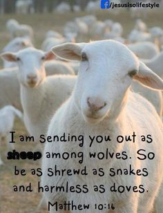 I am sending you out as sheep among wolves. So be as shrewd as snakes and harmless as doves. -Matthew 10:16