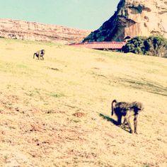 Golden Gate Highlands National Park! South Africa!!