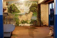 Acougue#Carne#Amazonia#Brasil#LulaSampaio