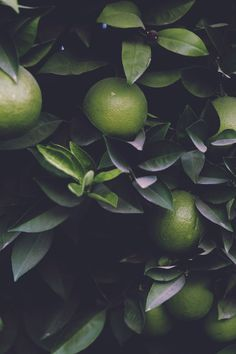 New Fruit Photography Beautiful Colour 49 Ideas Food Wallpapers, Nature Architecture, Build A Better World, Fruit Photography, Flowering Trees, Green Trees, Draco Malfoy, Shades Of Green, Green Colors