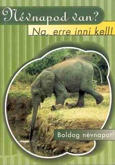 Happy Name Day, Happy Day, Today Is My Birthday, Happy Birthday, Creative Gifts, Holidays And Events, Diy And Crafts, Elephant, About Me Blog