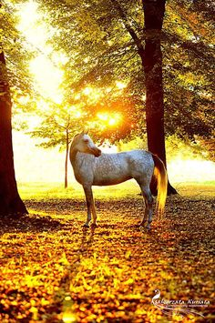 Horse standing in fall leaves at sunset in a forest