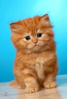Oliver by on deviantART Animals And Pets, Baby Animals, Funny Animals, Cute Animals, Cute Little Kittens, Kittens Cutest, Beautiful Cats, Animals Beautiful, Animal Gato