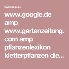 www.google.de amp www.gartenzeitung.com amp pflanzenlexikon kletterpflanzen die-10-schoensten-kletterpflanzen-fuer-pergolas-und-terrassen