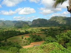 Mogotes in Valle de Viñales National Park, Cuba. These geologic formations date to the Mesozoic era, when layers of sedimentary limestone accumulated under water. Over time, acidic chemicals, along with wind and water erosion, molded these limestone remnants into mogotes.