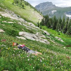 """Eric Lee on Instagram: """"Sometimes a field of flowers is too amazing not to just lay down in, today there were a lot of wild flowers #indianpeakswilderness #colorado #Wildflowers #Trailrunning #rockymountainrunners #NoFilter"""""""