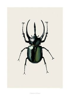 I think this some kind of beetle.
