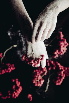 Wild ash whispered a secret by Anna O. Photography