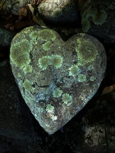 heart shaped rock covered in lichen.