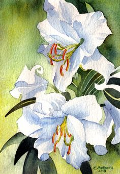 Watercolor Art - White Lilies by Christine Aelbers | This lily watercolor painting is from a photograph I took in the garden of my neighbor.  Title: White Lilies