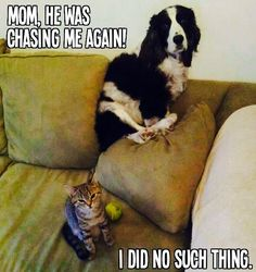 Mom, he was chasing me again!