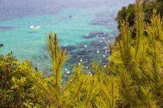 Seeing sea other pine trees - pics taken in Cala Gat, Mallorca