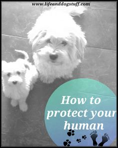 How To Protect Your Human #dogs #blog