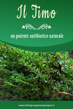 Timo, un potente antibiotico naturale Kraut, Evergreen, Aloe, Health And Beauty, Natural Remedies, Health Tips, Detox, The Cure, Medicine
