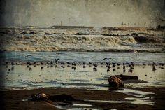Landscape photography, stormy sea, strong wind and seagulls, wall art, digital print fine art Attiva di MyOmbretta su Etsy
