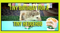 Tiny Hedgehog Has a Tiny Birthday Party with a Tiny Cake and Tiny Hamsters as Guests