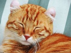 The study has not been directly on cats, but it does show that the chance of SAD affecting them is not inconceivable.