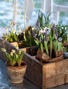 vintage wooden box, clay pots and flowers Spring Flowering Bulbs, Spring Bulbs, Garden Bulbs, Spring Sign, Diy Décoration, Spring Is Here, Dream Garden, Garden Inspiration, Spring Flowers