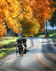 amish buggy.....Driving down country roads in the fall in a horse and buggy, listening to the horse's hoofs going clip-clop, clip-clop on the pavement, are memories of slower times when all seemed innocent.