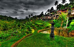 Dying to go back! A stunning image....truly, the light really can be like this in Bali.