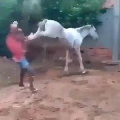 Funny Horse Videos, Funny Prank Videos, Super Funny Videos, Funny Videos For Kids, Funny Animal Videos, Funny Animals, Humor Videos, Funny Vidos, Very Funny Memes