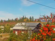 Gorgeous fall day