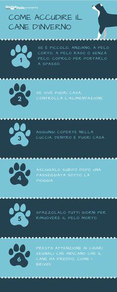Proteggere il cane dal freddo è importantissimo! #dog #dogcare #dogs #puppy #puppies #cold #winter #winterhacks #cane #doglovers